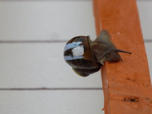 Loix - Course escargots - 16 mai 2015