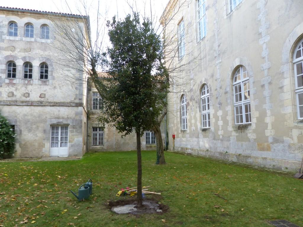 Arbre du climat - Saint-Martin de Ré - 30 octobre 2015