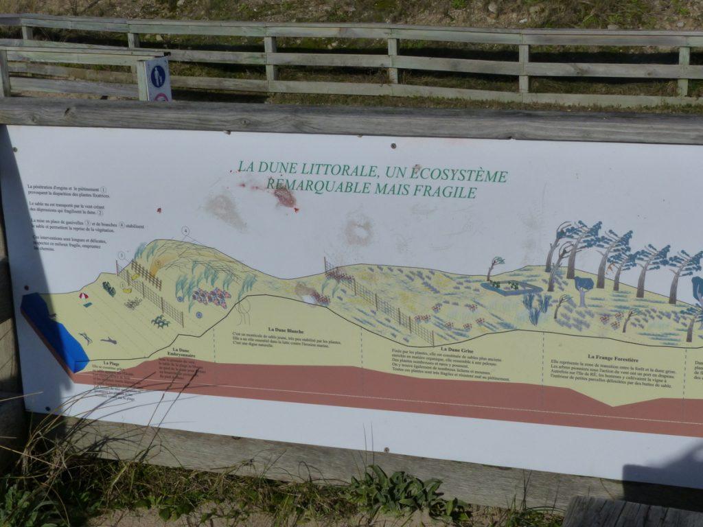Panneau sensibilisation à la protection des dunes - janvier 2016