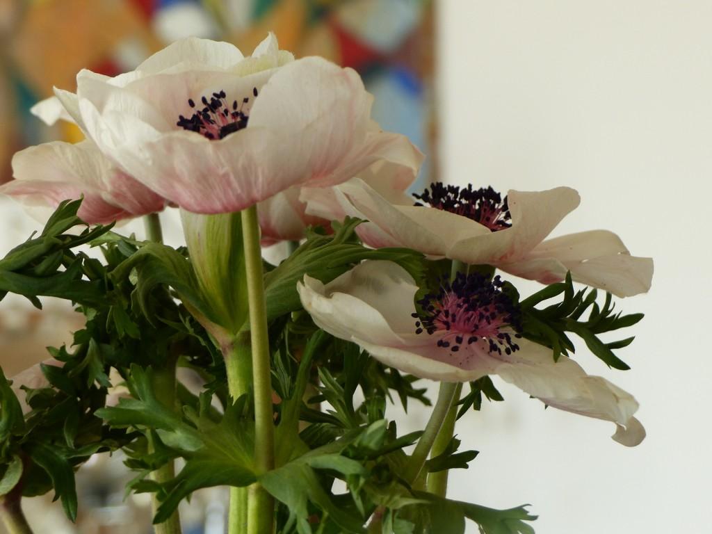 Bouquet de fleurs des Salières - mars 2016