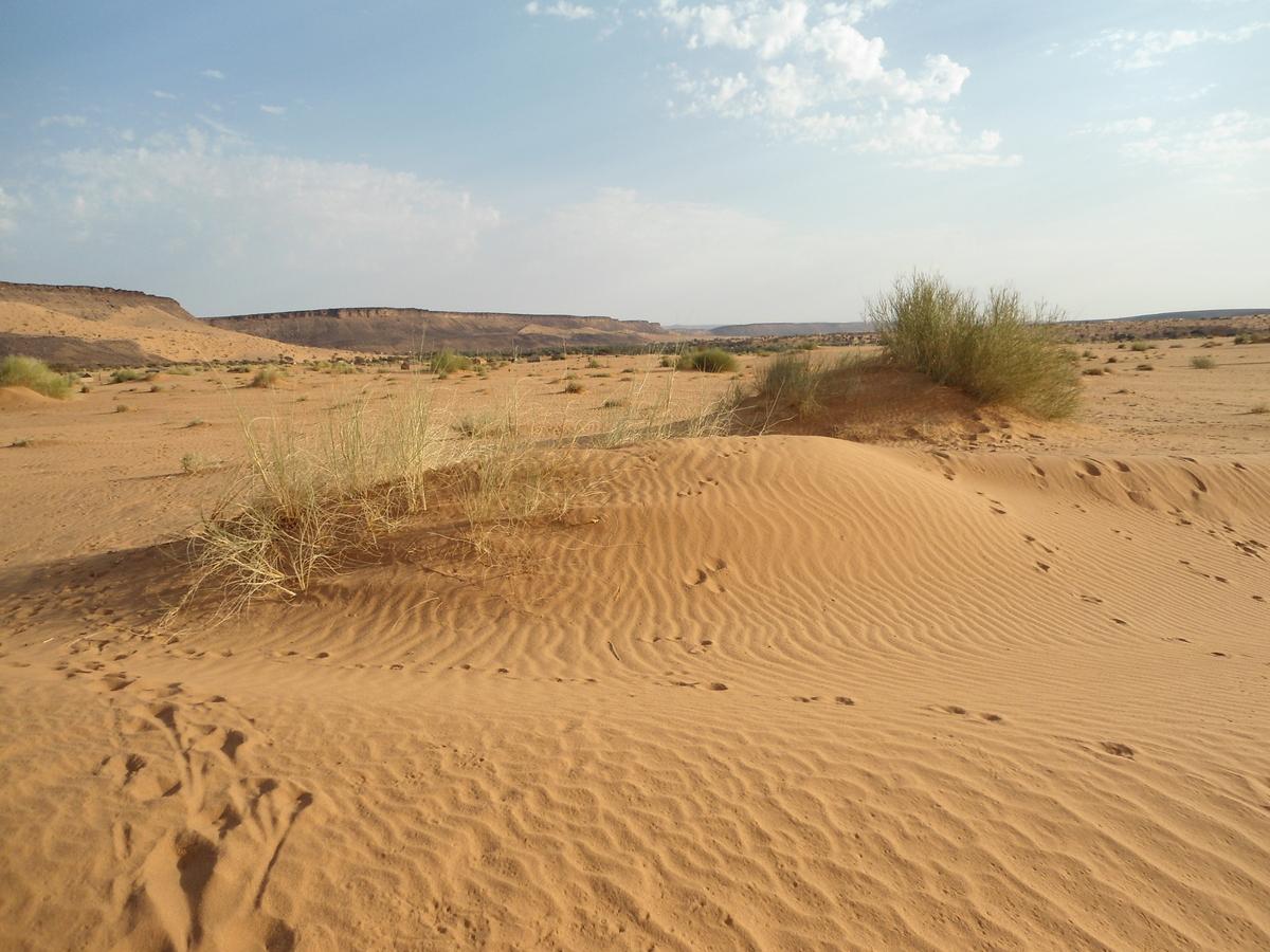 Désert de Mauritanie - Photo Bianca