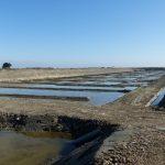Réhabilitation du marais Martineau à Loix