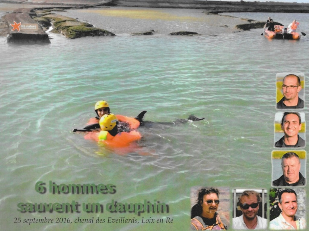 Pompiers - Sauvetage d'un dauphin à Loix - 29 septembre 2016