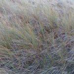 Les jeunes Rétais prennent soin de leurs dunes