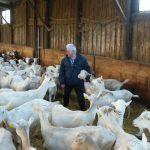 Bienvenue à la chèvrerie de Paul Georgelet, à Loix