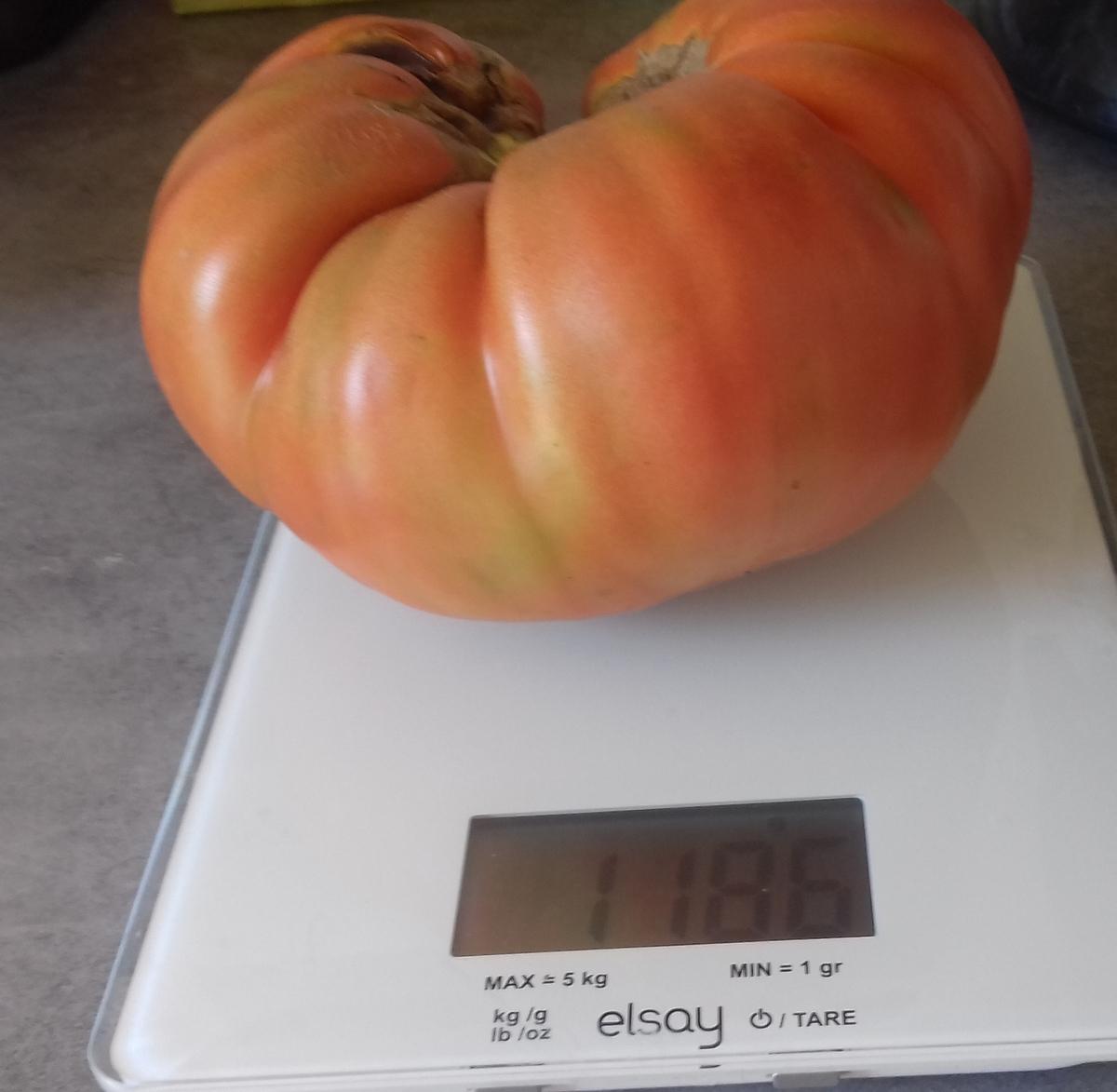 Ars-en-Ré - Tomate de Robert Héraudeau - 4 septembre 2018