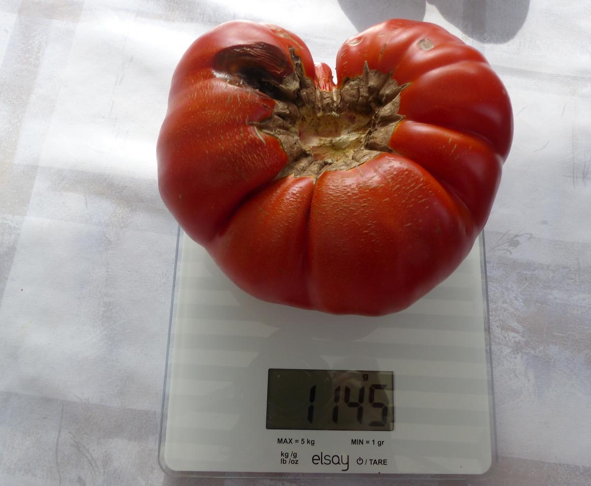 Ars-en-Ré - Tomate de Robert Héraudeau - 9 septembre 2018
