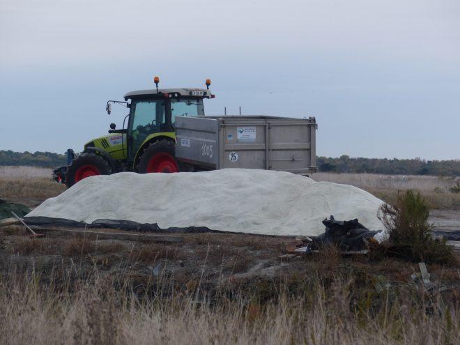 Ile de Ré - Sel sur bosses de marais - 31 octobre 2018