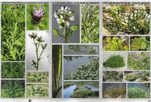 Saveurs sauvages de Ré - Lexique des plantes