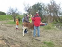 La vie à la campagne - Arrivée de Clochette