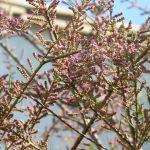 A mi-printemps, l'avis du pépiniériste