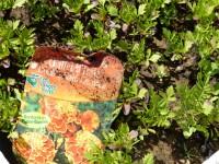 Fin avril, le conseil du jardinier