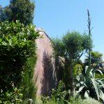 L'agave fleurit une fois, puis meurt