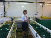 Fabienne Legall, Ecogarde, dans la nurserie des homards
