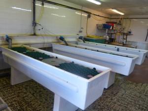 Lycée Martime et Aquacole d'Ars-en-Ré - Nurserie de homards