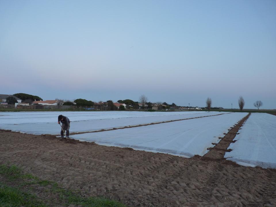 Premiers jours plantation pommes de terre