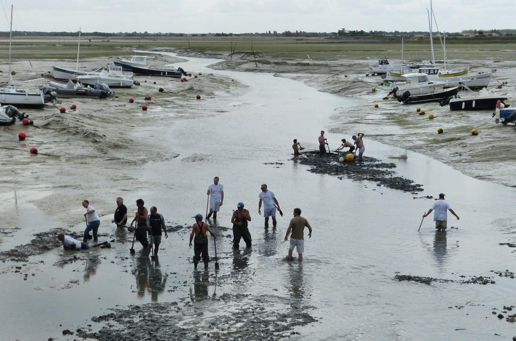 Loix - Fête du port - 11 août 2014