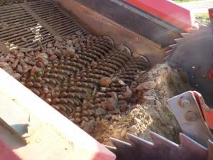 Plantations pommes de terre