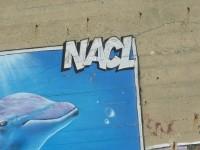 Dauphins - Graffeur NACL - Conche des Baleines