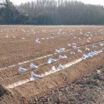 Préparation des sols pour la pomme de terre