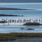 Balades dans le monde des oiseaux