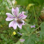 Le post de Véro, amie des abeilles