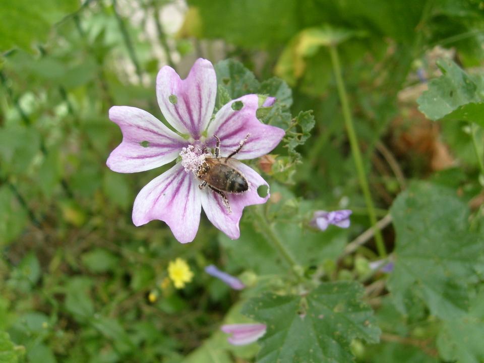 Véro, amie des abeilles